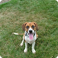 Adopt A Pet :: Bonnie - New Oxford, PA