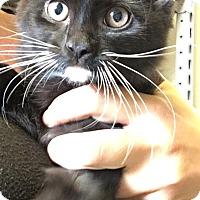 Adopt A Pet :: Judy - Covington, KY