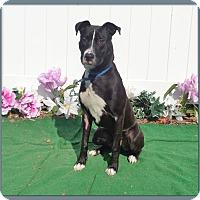Labrador Retriever Mix Dog for adoption in Marietta, Georgia - DANE