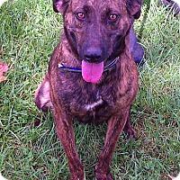 Adopt A Pet :: Greta - Metamora, IN