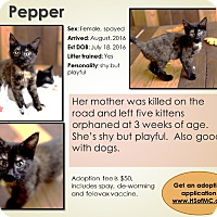 Adopt A Pet :: Pepper - Mount Gilead, OH