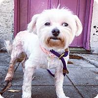 Adopt A Pet :: Lindy Lou is a DREAM! - Los Angeles, CA