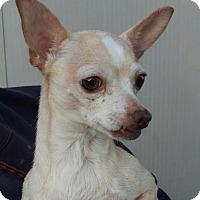 Chihuahua Mix Dog for adoption in Las Vegas, Nevada - Princess