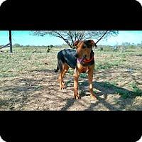 Adopt A Pet :: FAYE - Mesa, AZ