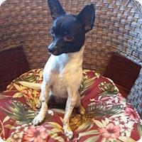 Adopt A Pet :: Hannah - Temecula, CA