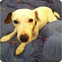 Adopt A Pet :: Libby in Midland - Midland, TX