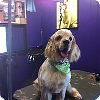 Adopt A Pet :: Brodie-Deaf-Pending - Surrey, BC