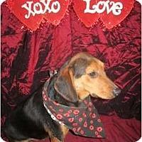 Adopt A Pet :: Maxwell - Cincinnati, OH