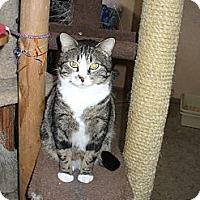Adopt A Pet :: Iggy - Bentonville, AR