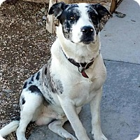Adopt A Pet :: Rufus - Cedar City, UT