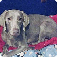 Adopt A Pet :: Rudi - Grand Haven, MI