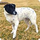 Adopt A Pet :: PUPPY AMUKA