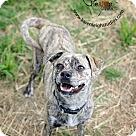 Adopt A Pet :: Hedy