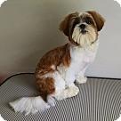 Adopt A Pet :: Mr. Wiggles