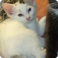 Adopt A Pet :: SPOT - Acme, PA