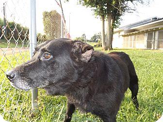 Shepherd (Unknown Type) Mix Dog for adoption in Thomaston, Georgia - Granny