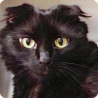 Adopt A Pet :: Ziggy - Chattanooga, TN