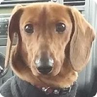 Adopt A Pet :: Luke Skywalker - Houston, TX