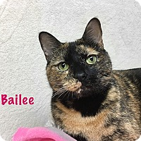 Adopt A Pet :: Bailee - Foothill Ranch, CA