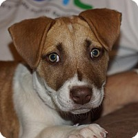 Adopt A Pet :: Lulu - Holly Springs, NC