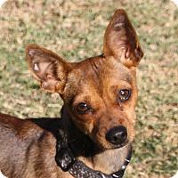 Adopt A Pet :: Flora - Edmonton, AB