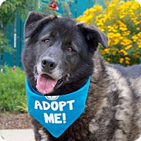 Adopt A Pet :: Felix - Pacific Grove, CA