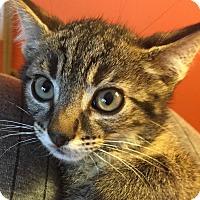 Adopt A Pet :: Klaten - Colorado Springs, CO