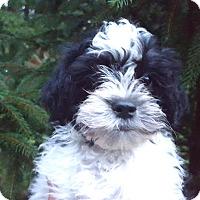 Adopt A Pet :: Silas - Medora, IN