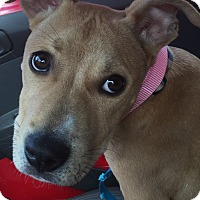Adopt A Pet :: LILY - Pittsburgh, PA
