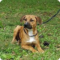 Adopt A Pet :: Slick - Atchison, KS