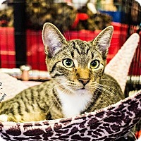 Adopt A Pet :: A..  Jax - Mooresville, NC