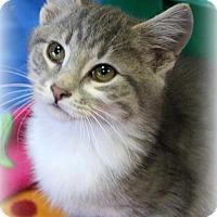 Adopt A Pet :: Mason - Millersville, MD