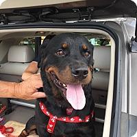 Adopt A Pet :: Nicky - Frederick, PA
