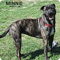 Adopt A Pet :: Minnie - Elizabeth City, NC