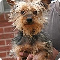 Adopt A Pet :: Solo - Sugarland, TX