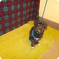 Adopt A Pet :: *CUPCAKE - Upper Marlboro, MD