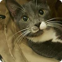 Adopt A Pet :: alley - Bayside, NY