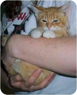 Domestic Shorthair Kitten for adoption in Odenton, Maryland - Blinky