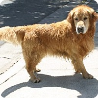 Adopt A Pet :: Spike - Canoga Park, CA