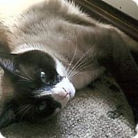 Adopt A Pet :: *Peanut - Winder, GA