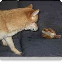 Adopt A Pet :: Kiko - Antioch, IL