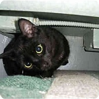 Adopt A Pet :: Johnny - Mission, BC