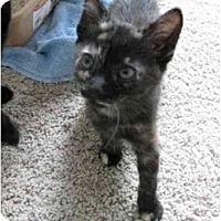Adopt A Pet :: Siren - Davis, CA