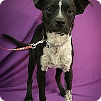 Adopt A Pet :: Fletcher - Broomfield, CO