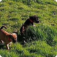 Adopt A Pet :: Sandi Wags - Southampton, PA