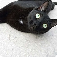 Adopt A Pet :: Sarafina - Bonita Springs, FL
