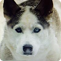 Adopt A Pet :: Missy (Courtesy Listing) - Cedar Rapids, IA