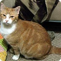 Adopt A Pet :: Tigger - Pensacola, FL