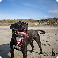 Adopt A Pet :: Scout - Tillamook, OR