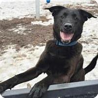 Labrador Retriever Mix Dog for adoption in Briarcliff Manor, New York - Hudson